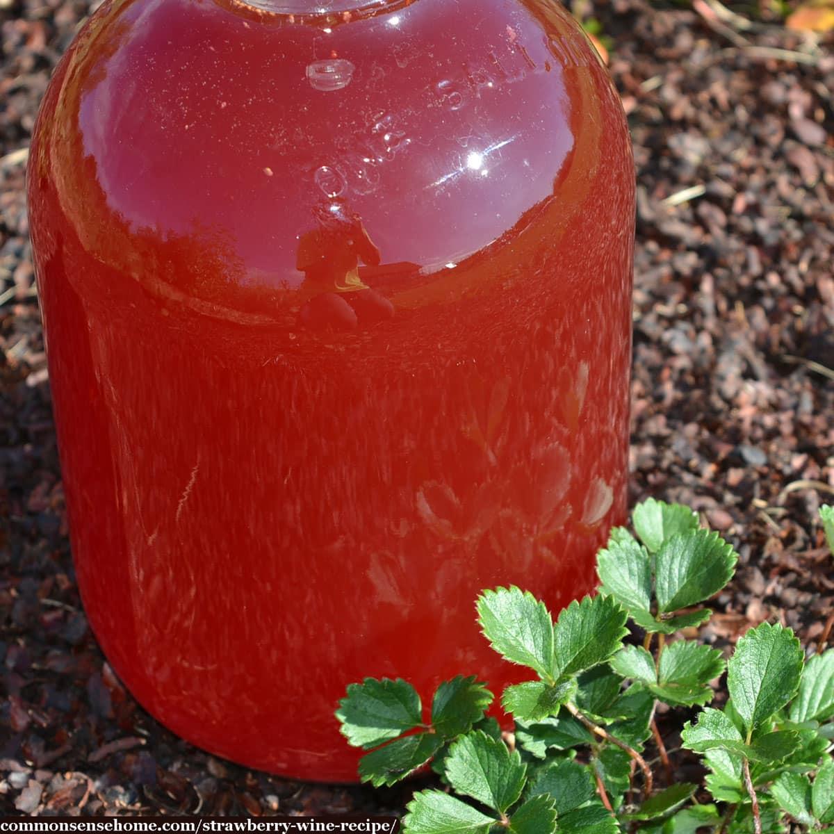 gallon jug of homemade strawberry wine