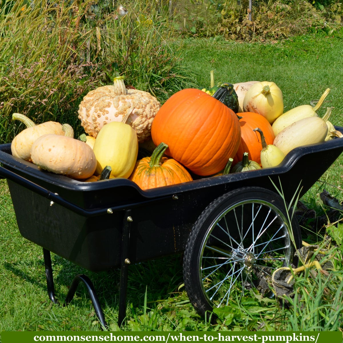 cart full of pumpkins and winter squash