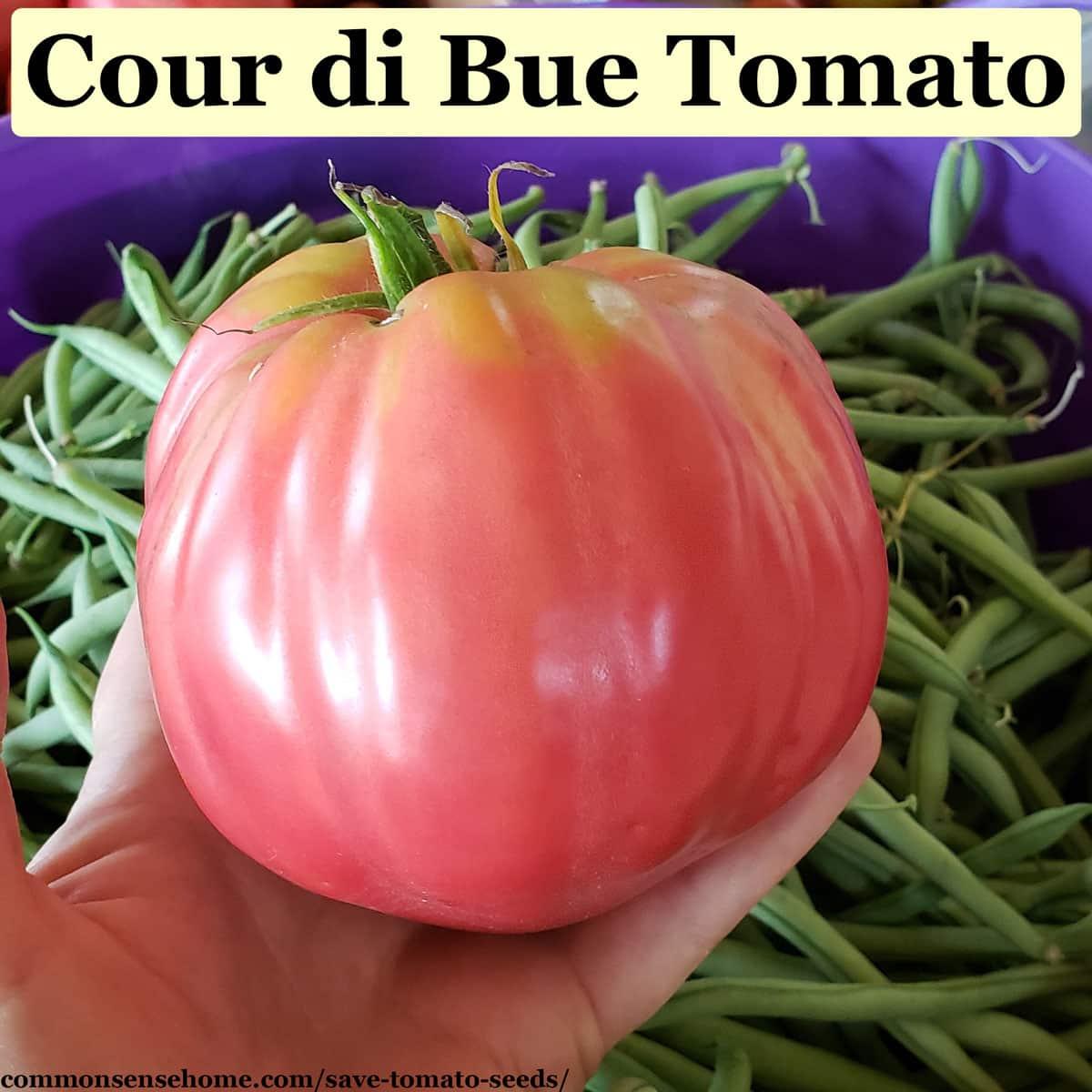 cour di bue tomato
