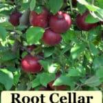 root cellar alternatives