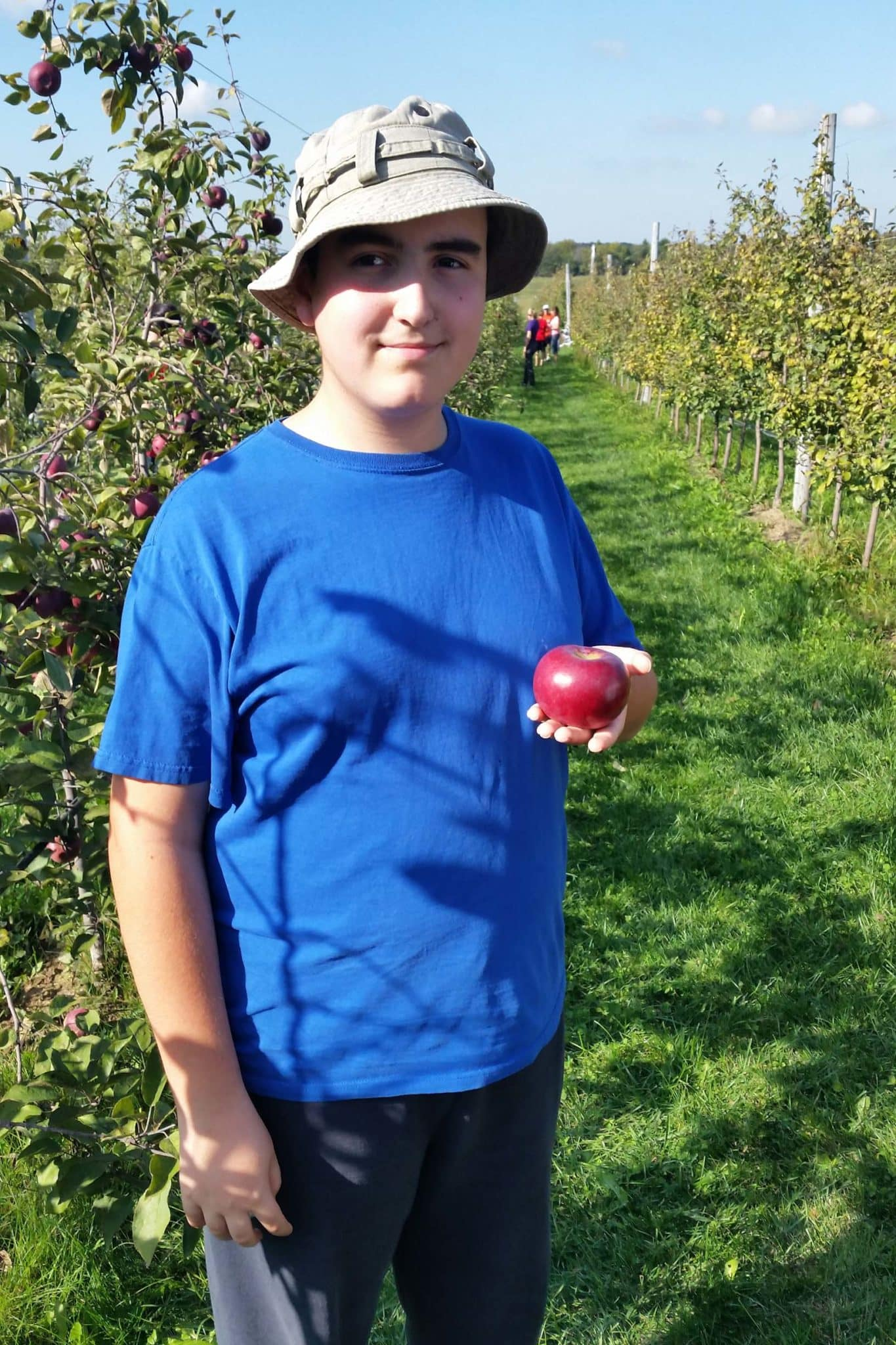 apple picking at an organic orchard