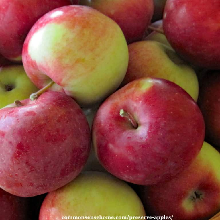 Preserve Apples for Year Round Use 17 Easy and Creative Ways