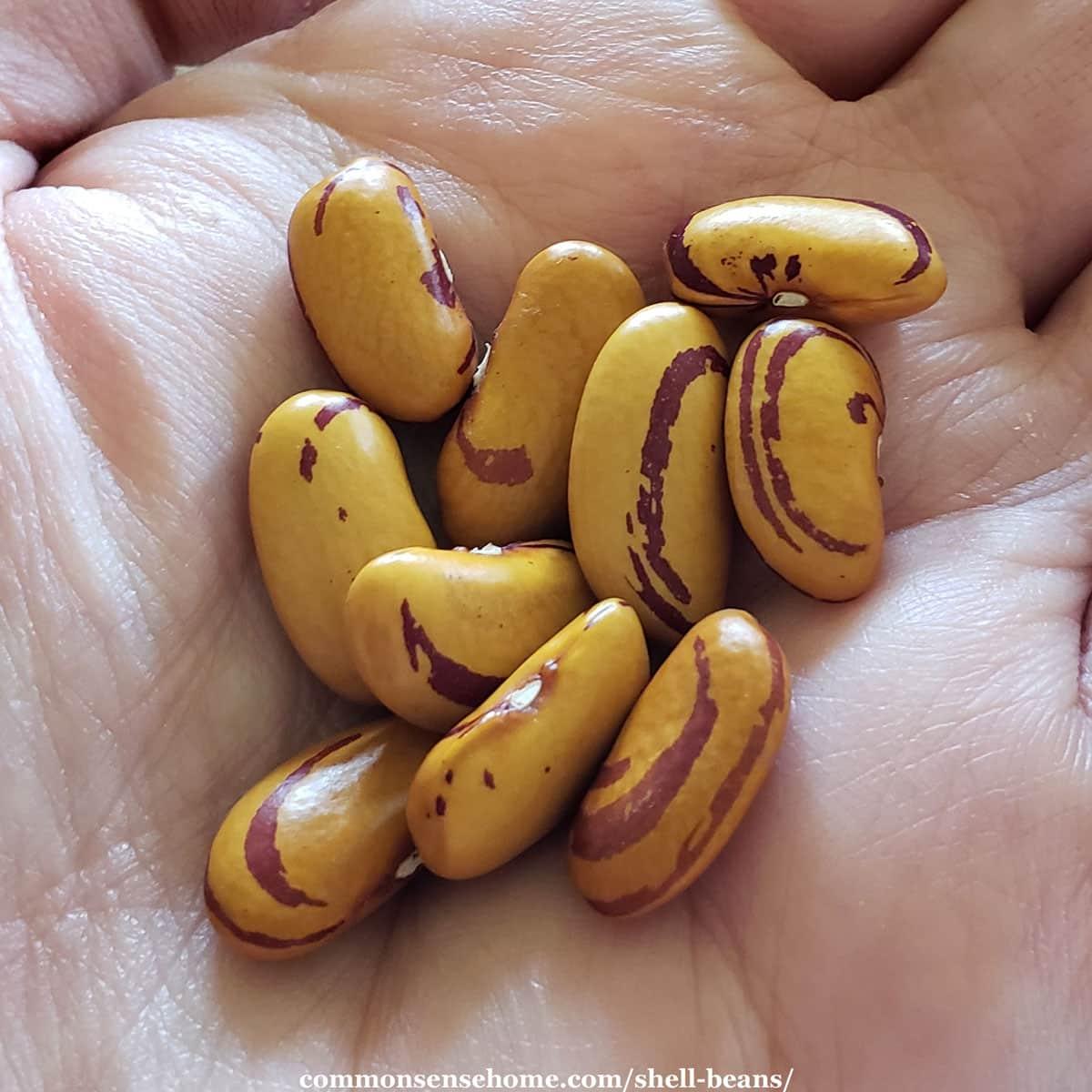 tiger eye beans