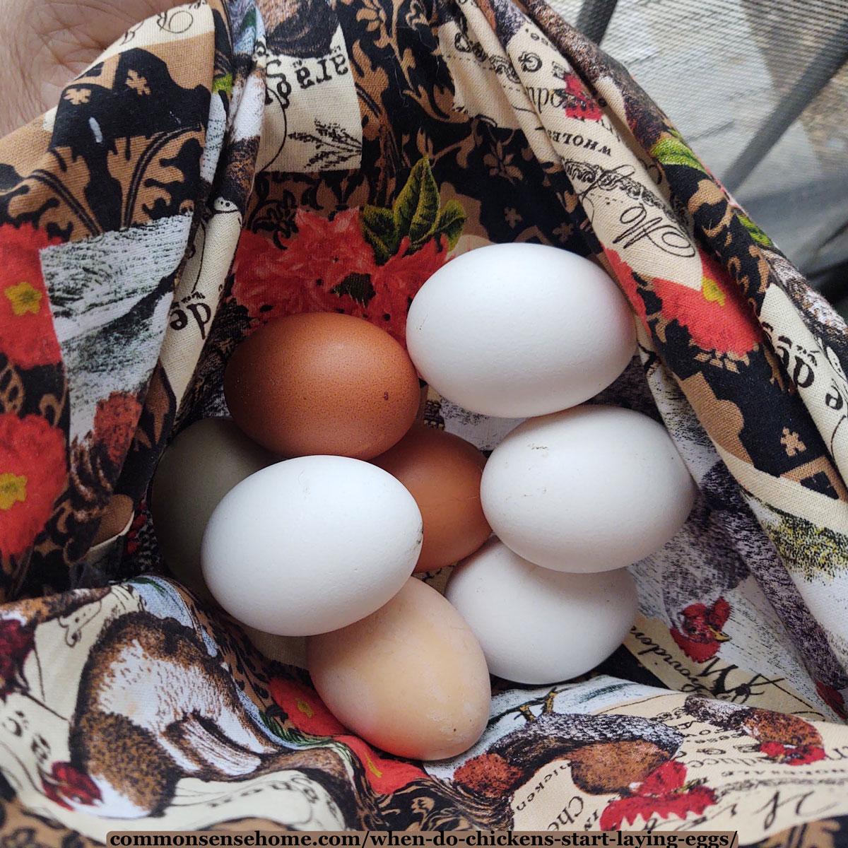 fresh picked eggs