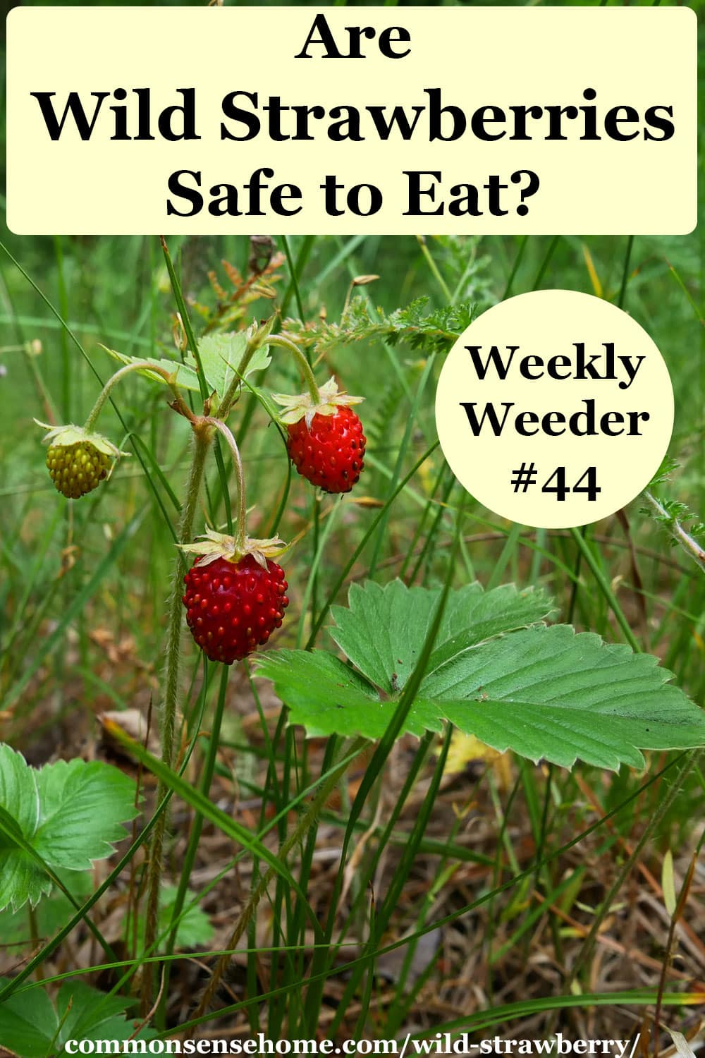 Are Wild Strawberries Safe to Eat?