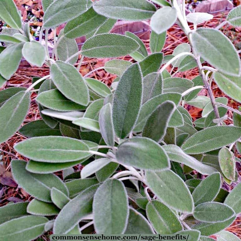 Sage Benefits for Home, Health & Personal Care