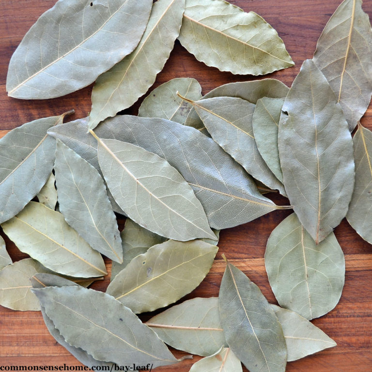 Bay Leaf – Fresh or Dry, It's a Plant with Many Uses