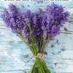 Lavender Plants – Growing Tips & Uses in the Kitchen and Home
