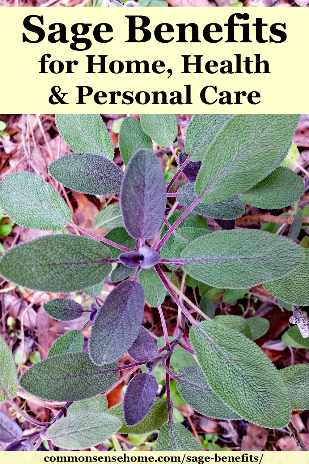Sage Benefits for Home, Health and Personal Care